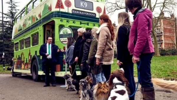 Dogs Tour London in Giant Bus Just for Them and the Video is Adorable
