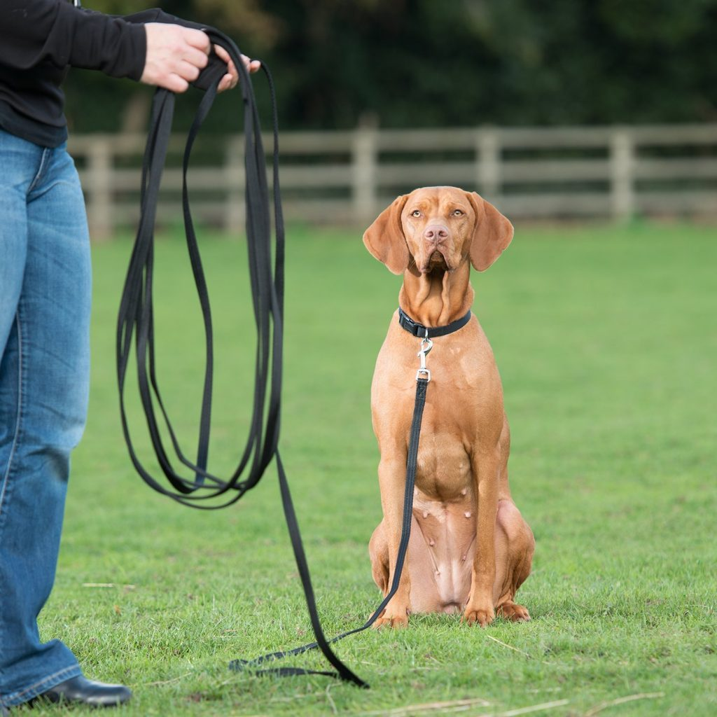long line recall leash