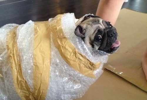 Moving with your Dog: 23 Ways to Help Pets Adjust to a New Home