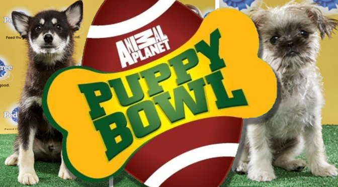 puppy-bowl-xiii