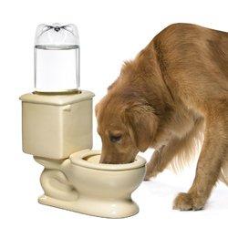 toilet water dish