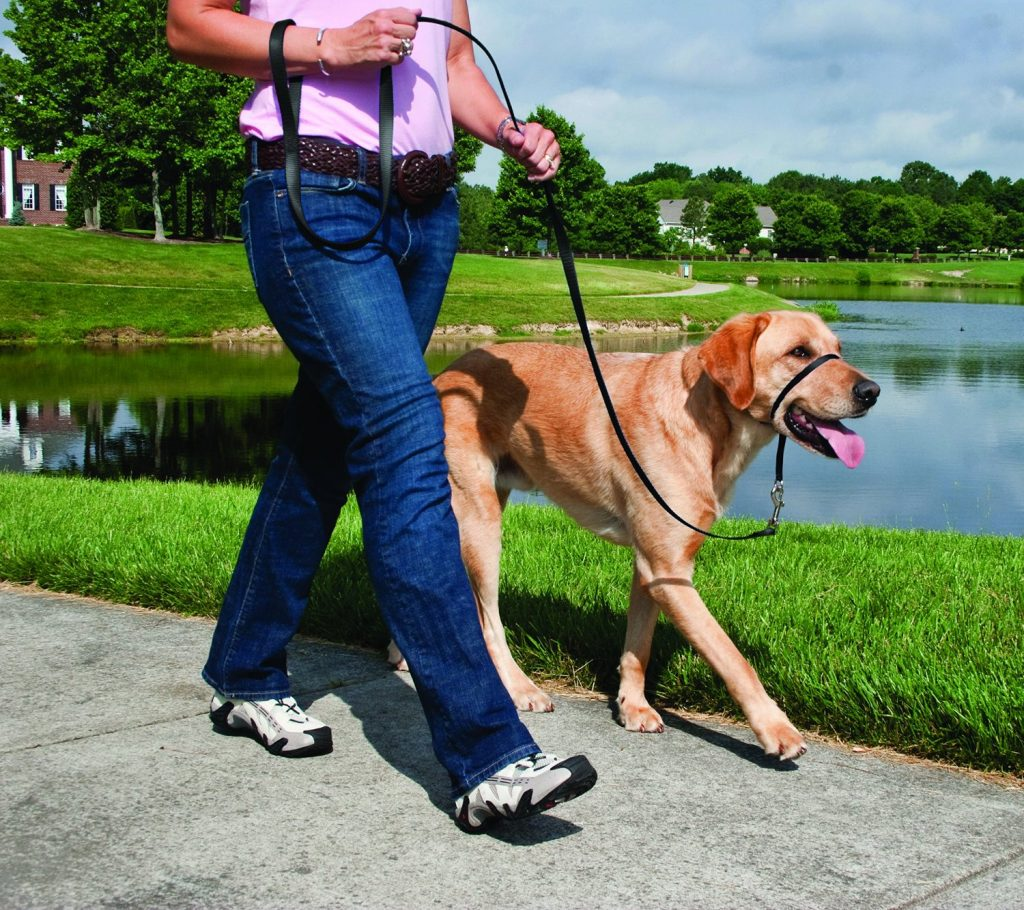 Best Dog Collars To Prevent Pulling