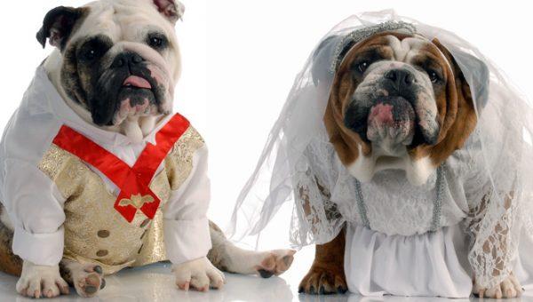 New Court Decision Includes Pet Custody in Divorce Rulings