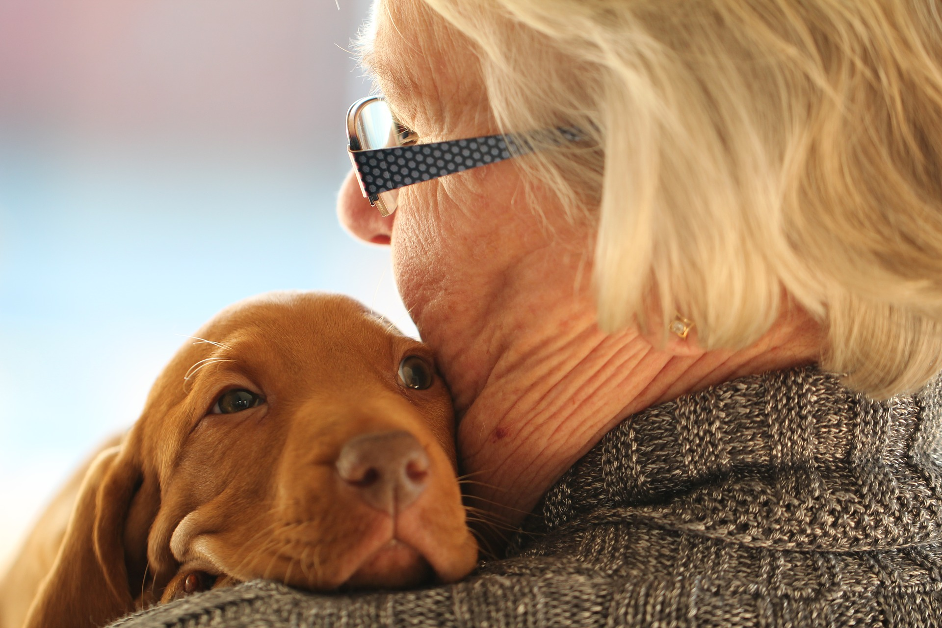 Best Therapy Dogs For Elderly