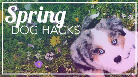 spring break dog hacks