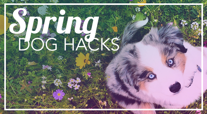 spring break dog hacks