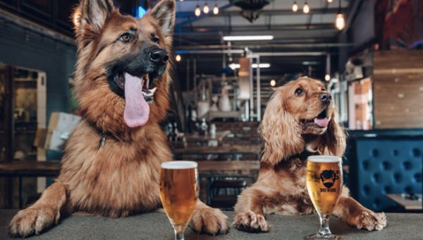 Brewdog First in US to Offer Paid Pet Parental Leave in US