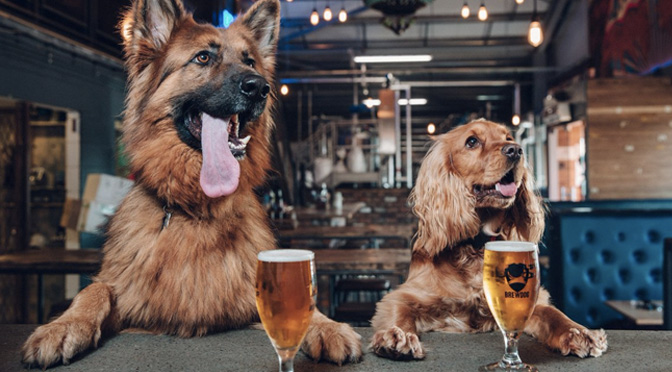 brewdog pawternity leave