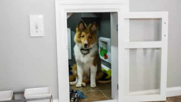 7 Simple Steps to Creating a Room Just for Your Dog