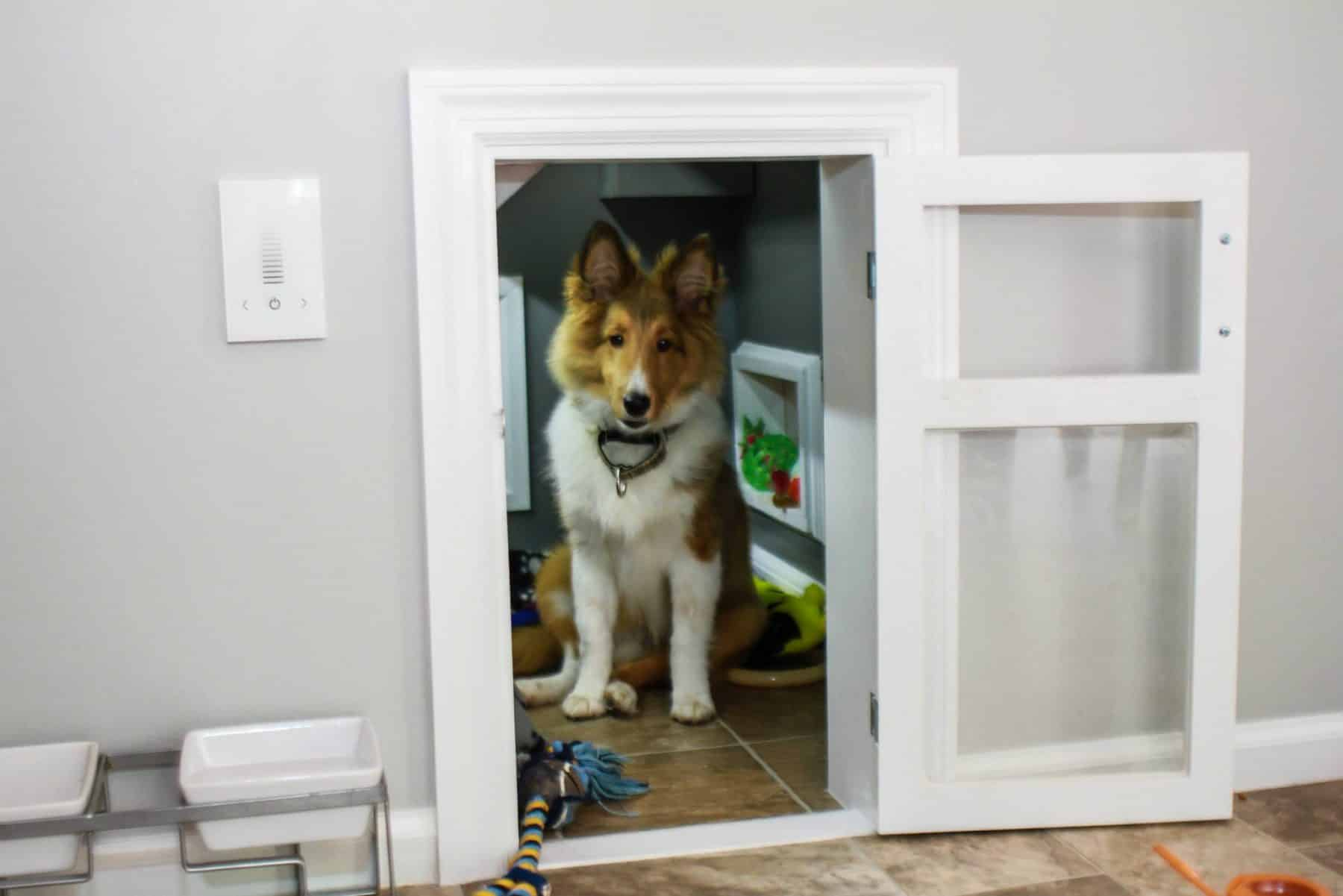 Rooms For Dogs 7 Simple Steps To Creating A Room Just For Your Dog  Rover