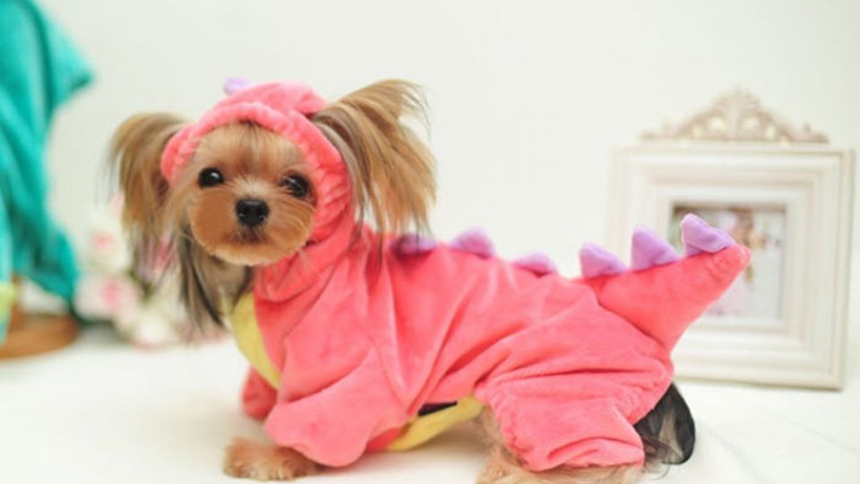 437fce8da5 Dog Pajamas  The 10 Cutest