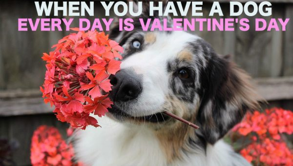 Your Guide to the Perfect Date with Your Dog