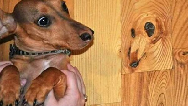 People are Seeing Dog Faces in Wood and It's Strangely Amazing