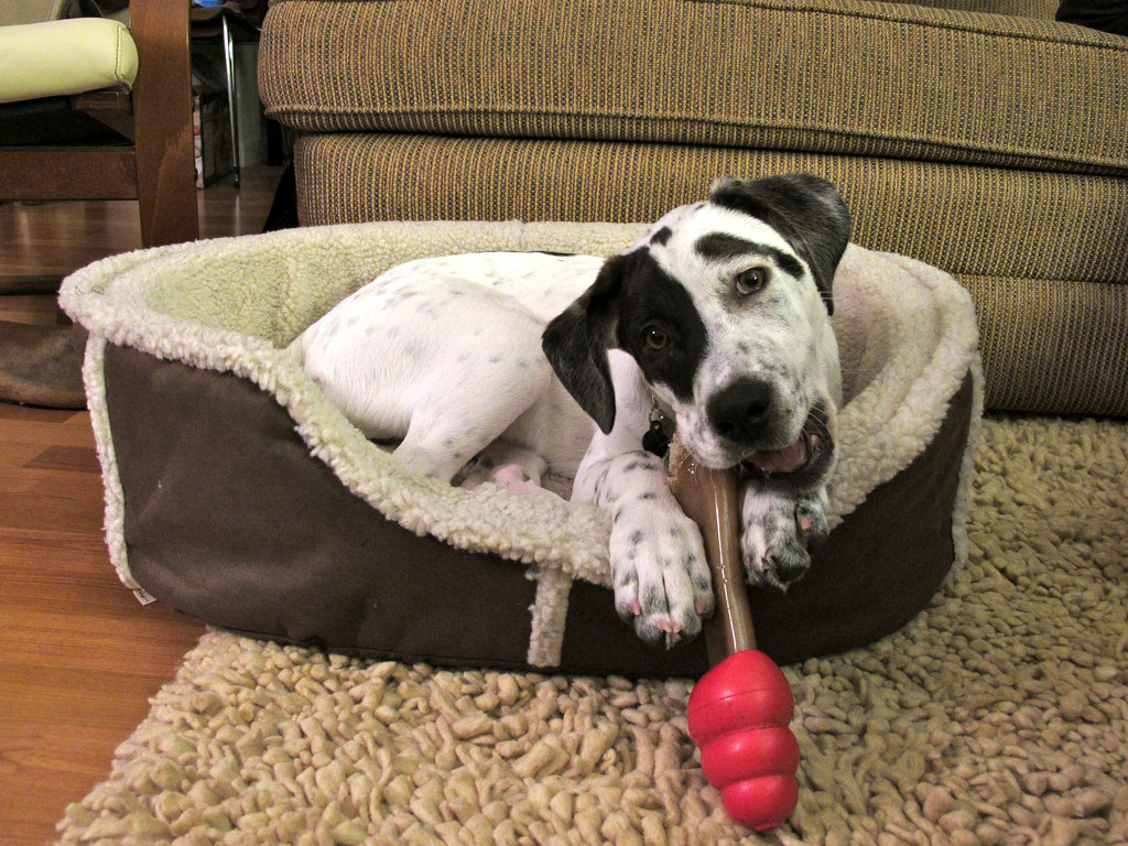7 simple steps to creating a room just for your dog rover com