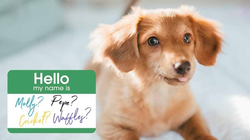 10 sentences about puppy