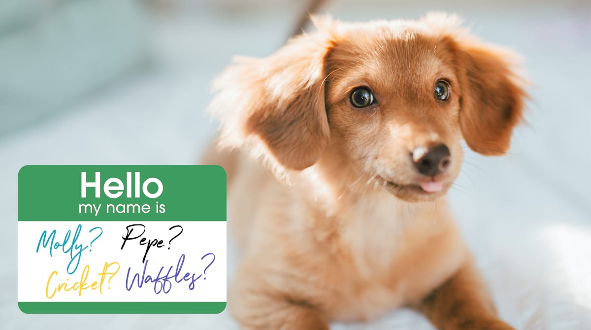 Cute Dog Names 101 Cute Dog Names For Your Sweet Pup In 2019