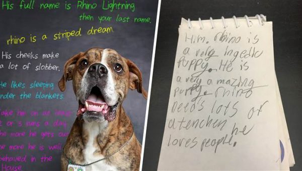 Child's Letter to Dog's Next Family is Heartbreakingly Perfect