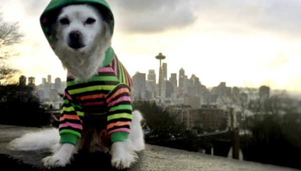 7 In-City Hikes for Seattle Dogs