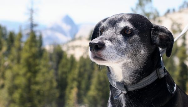 When (and How) to Start Treating Your Dog Like a Senior Dog