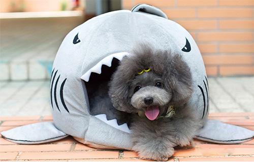 shark bed