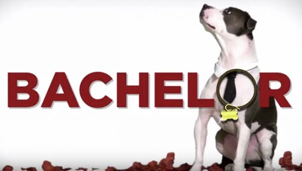 Must-See 'Bachelor' Parody Video Promotes Dog Adoption for Valentine's Day
