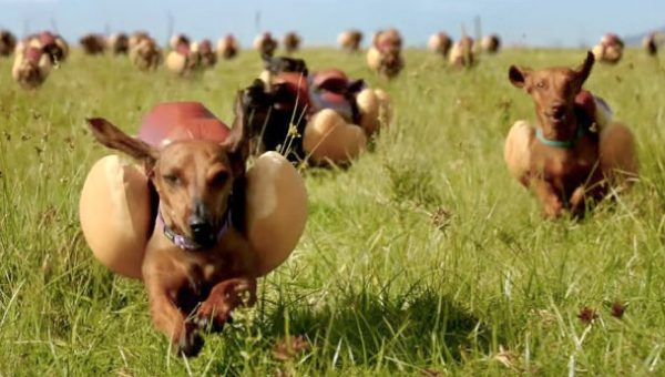 Rank the Best Dog-Themed Super Bowl Commercials of All Time