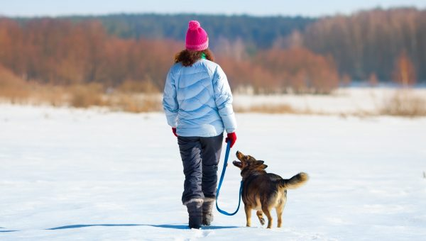 10 Expert-Approved Winter Activities for Happy, Healthy Dogs