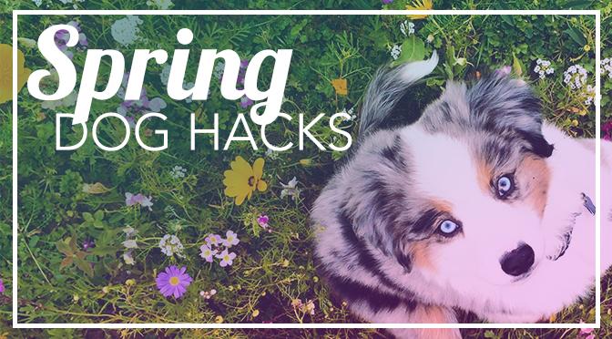 spring break dogs