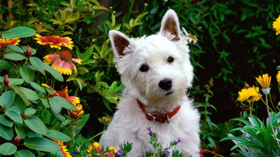 10 Safe Plants for Dogs You Can Add to Almost Any Garden Right Now