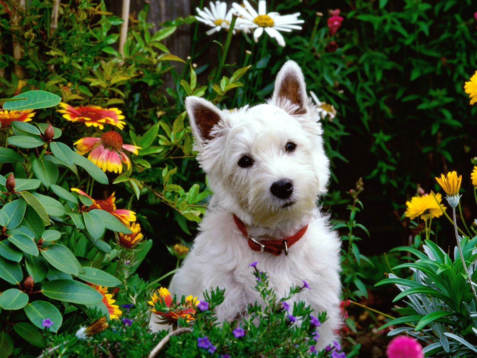 10 safe plants for dogs you can add to almost any garden for Dog safe houseplants