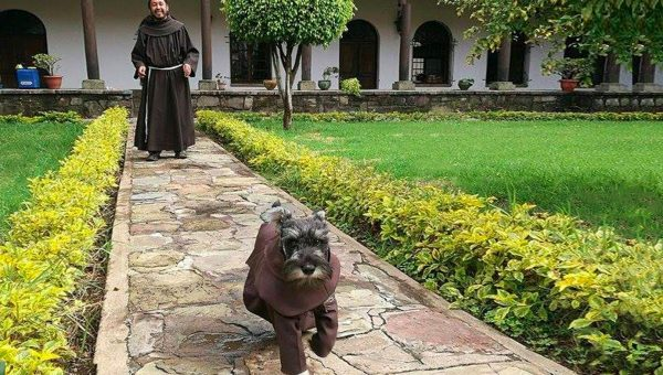 Monastery Adopts Stray Dog and Names Him 'Friar Moustache'