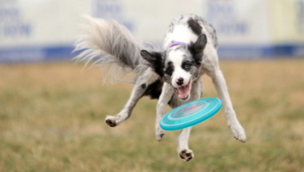 Tighten Up Your Dog's Fetch Game (or Just Have Fun with It)