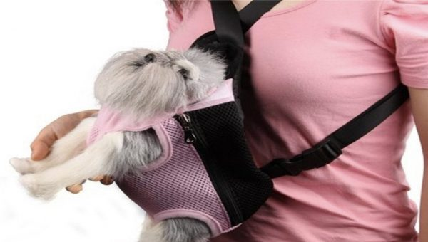 15 Accessories for People Who Need to Have Their Dog by Their Side at All Times (Who, Me?)