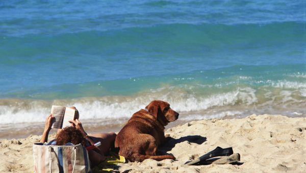 11 Best Beach Reads for Dog Lovers
