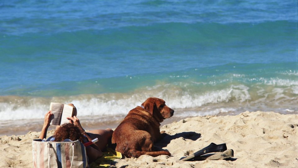 beach reads for dog lovers