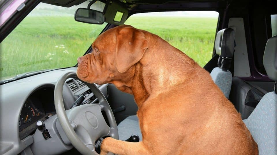 Car Sickness in Dogs: Why it Happens and How to Help