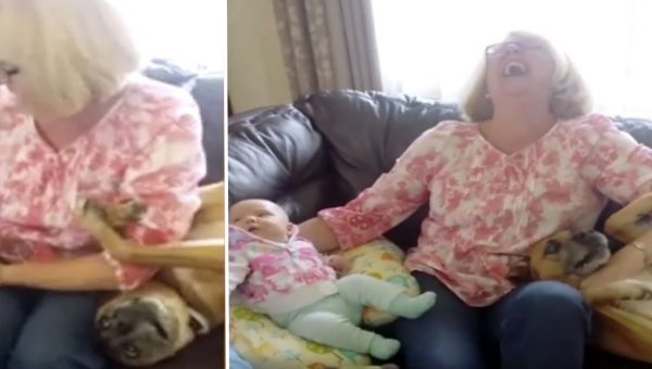 Clever Dog Tries to Steal Grandma's Attention Away from New Baby