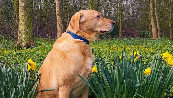 #dogswithdaffodils is the Cheerful Hashtag We've Been Craving