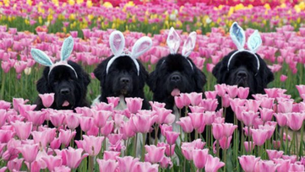 Dogs vs. Bunnies: Who's Cuter? Let Us Help You Decide.