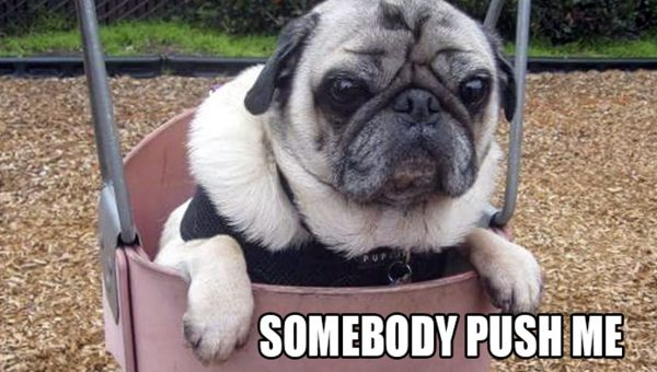 9 Pugs Being Utterly Ridiculous