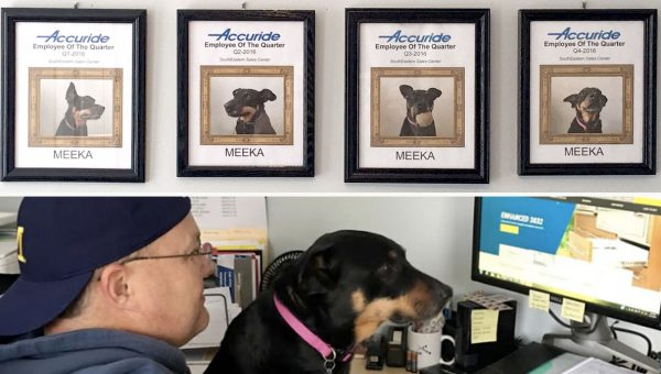 Rescue Dog Wins Employee of the Quarter, Every Time, All of the Time