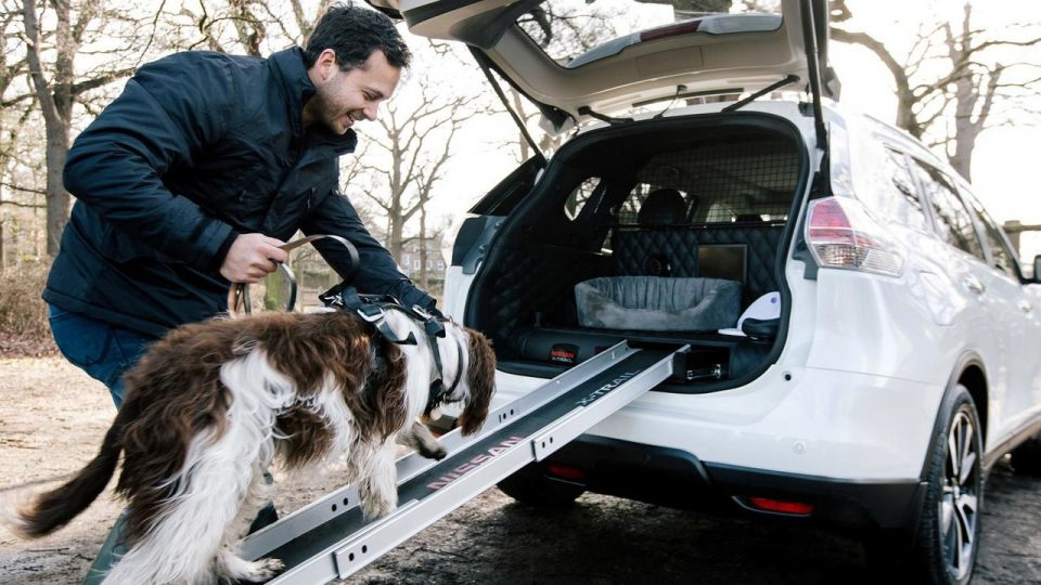 Crazy Car Designed for Dog People Has Built-In Dog Bath, Ramp, and ...