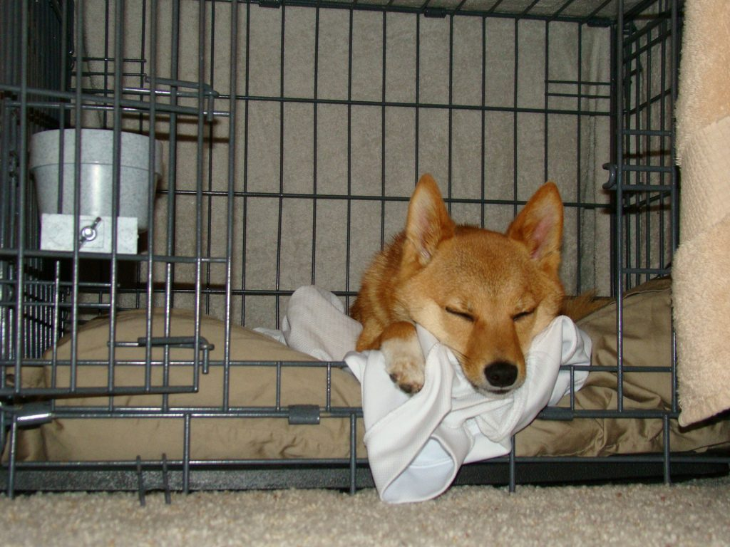 dog in crate happy