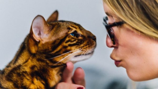 10 Tips to Help You Become the Best Cat Owner Ever