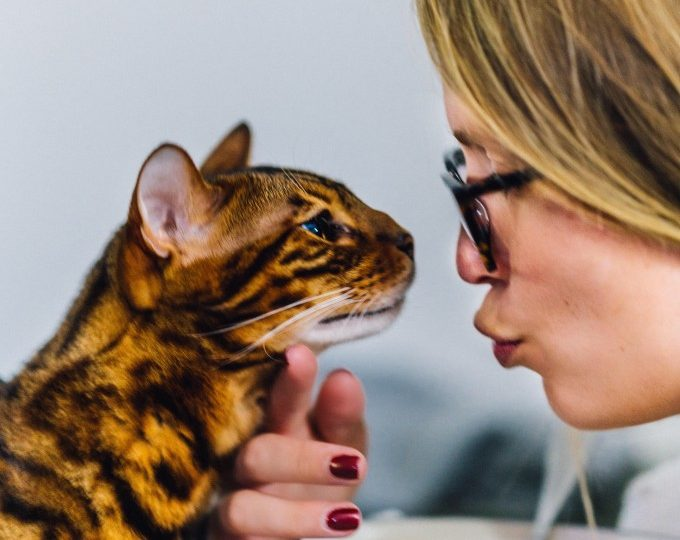 10 Tips to Help You Become the Best Cat Owner Ever | The Dog ...