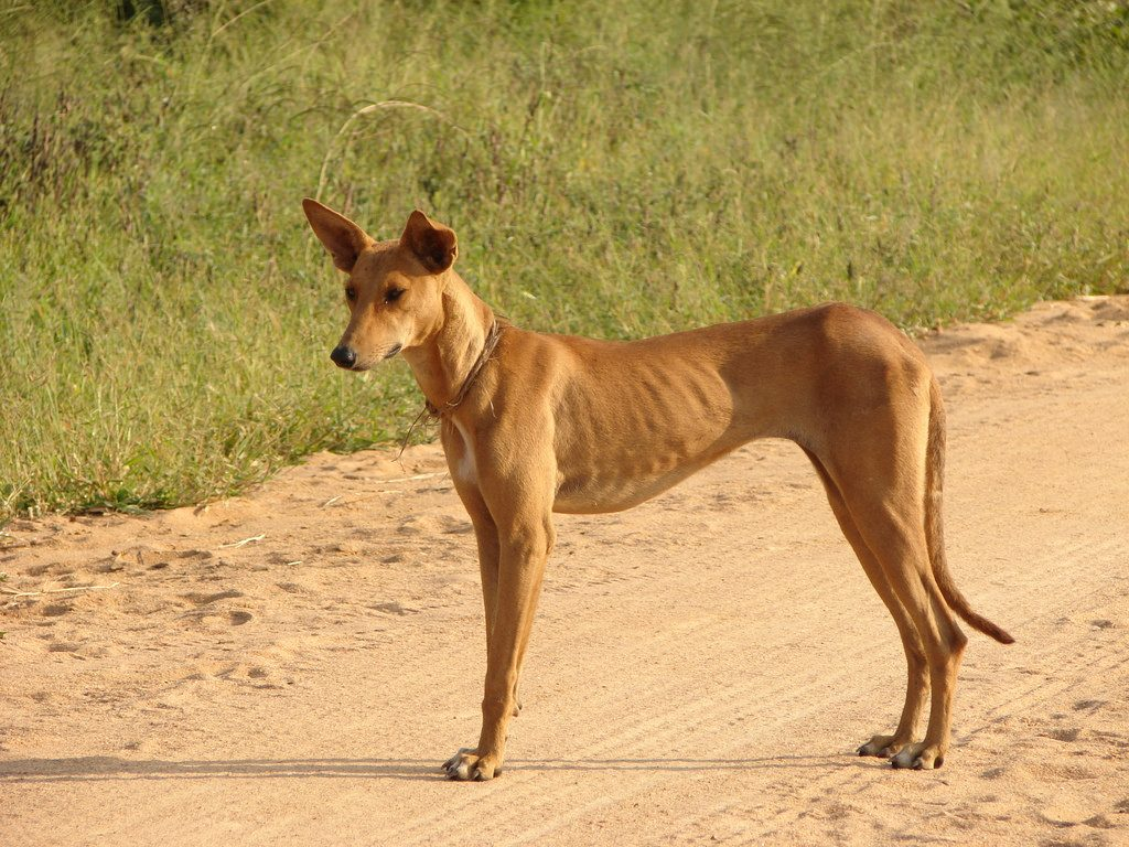 75 Of The Worlds Dogs Dont Have A Breed But They Do Name