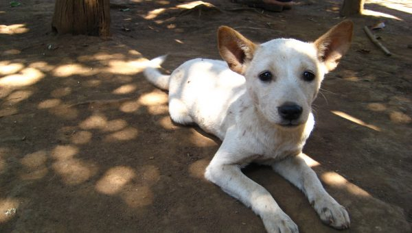 75% of the World's Dogs Don't Have a Breed, but They Do Have a Name. Meet the Village Dog.
