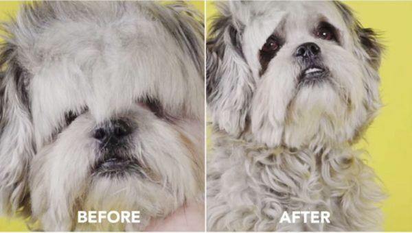 Mesmerizing Video of Dogs Getting Bangs Cut Is Your 2 Minutes of Zen