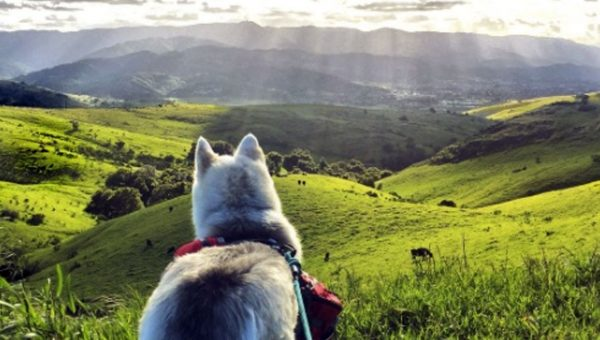 Top 7 Dog-Friendly Hikes in the Bay Area