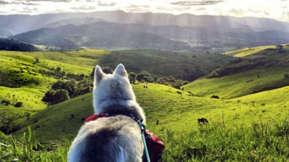 Best Dog Training Bay Area